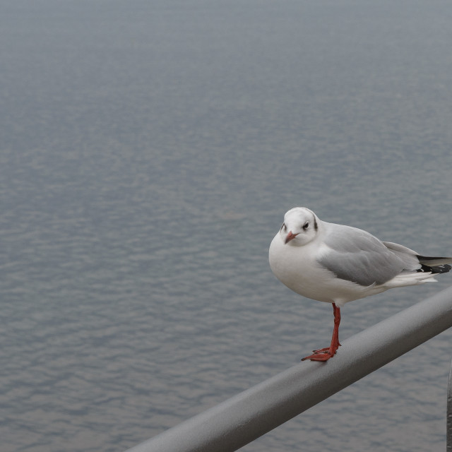 """""""seagull stay on the coast"""" stock image"""