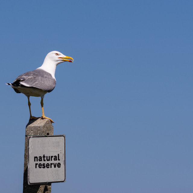 """""""the big seagull rests on a pole with a signboard of the natural"""" stock image"""