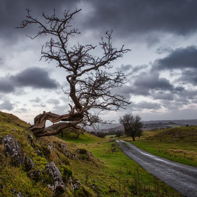 """haunted tree"" stock image"