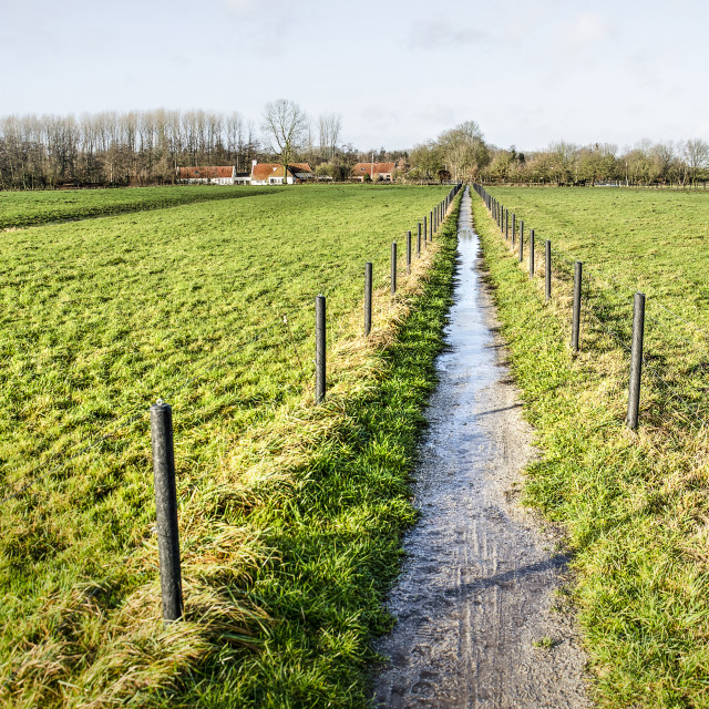 """""""Muddy footpath in the Netherlands"""" stock image"""