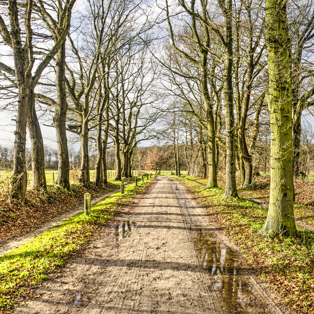 """""""Dirt road on a sunny winter day"""" stock image"""