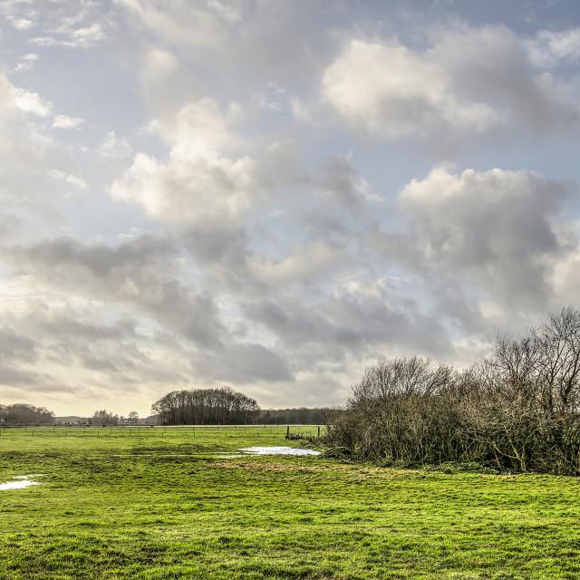 """""""Big sky over Dutch meadows"""" stock image"""