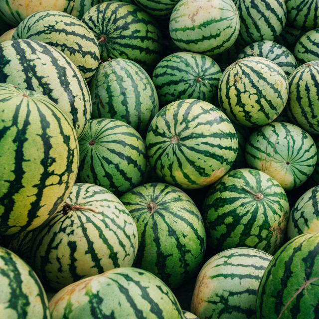 """Green watermelons with black stripes"" stock image"