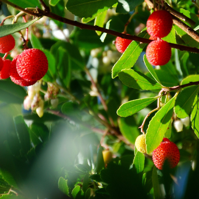 """""""stawberry"""" stock image"""