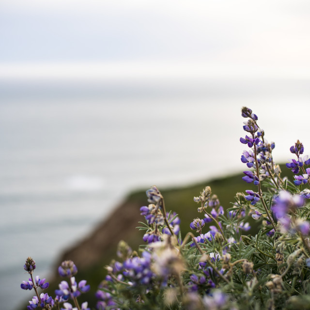 """Wildflowers in California State Park"" stock image"