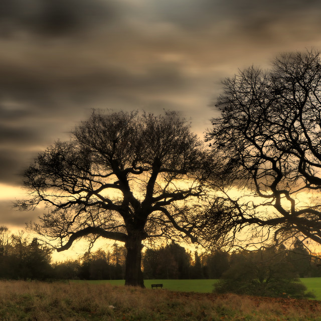 """Trees in Weald Park"" stock image"