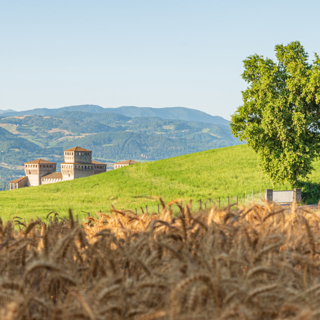 """""""Emilian hills, ancient fortress and wheat field"""" stock image"""