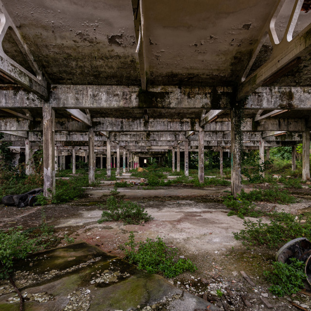 """""""Image of abandoned industrial warehouse where the vegetation is"""" stock image"""