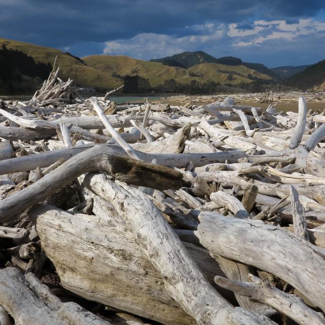 """Driftwood1"" stock image"