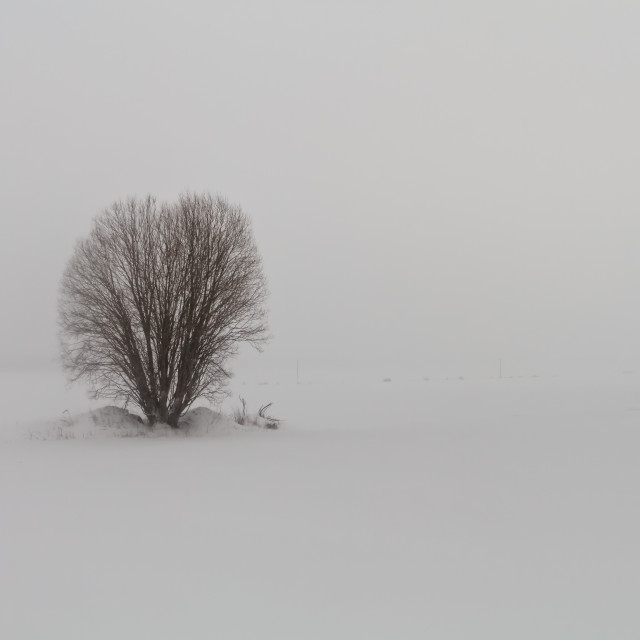 """""""Lonely Willow In Blizzard"""" stock image"""