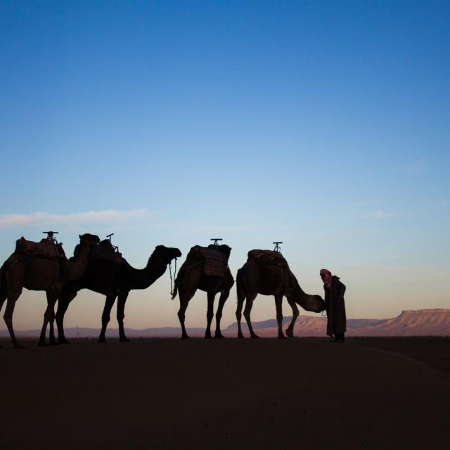 """""""Sahara Desert"""" stock image"""