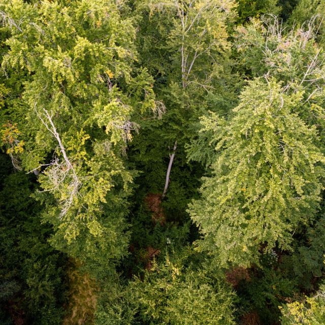 """aerial view on a forest in Germany"" stock image"
