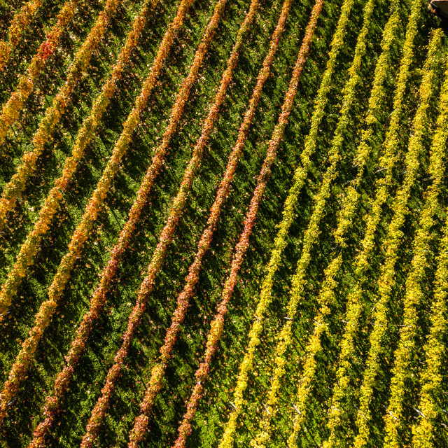 """Vineyards in fall colors near Stuttgart, Germany"" stock image"