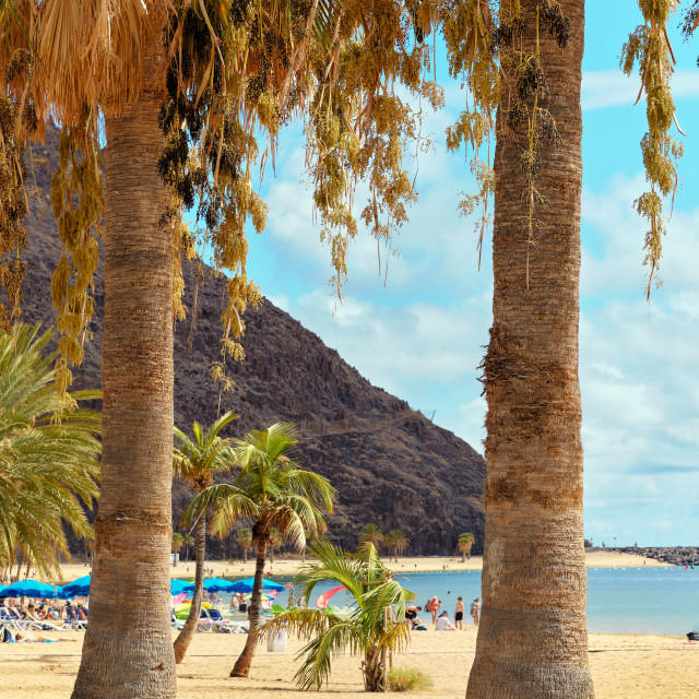 """""""People sunbathing on sandy picturesque beach palm trees lined of"""" stock image"""