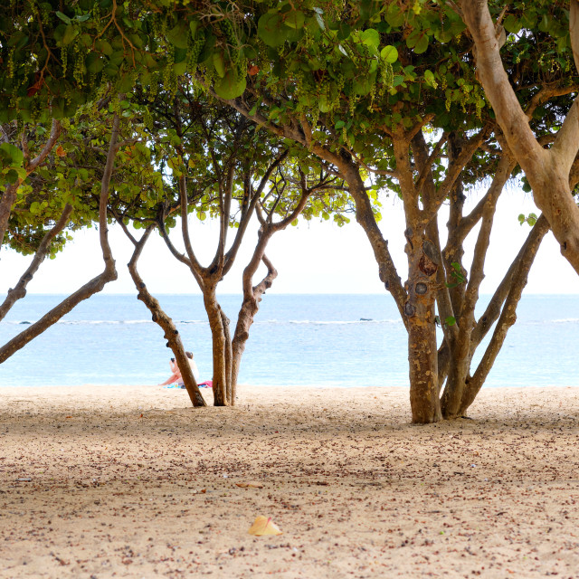 """""""Through tropical trees trunks and lush foliage view to Atlantic"""" stock image"""