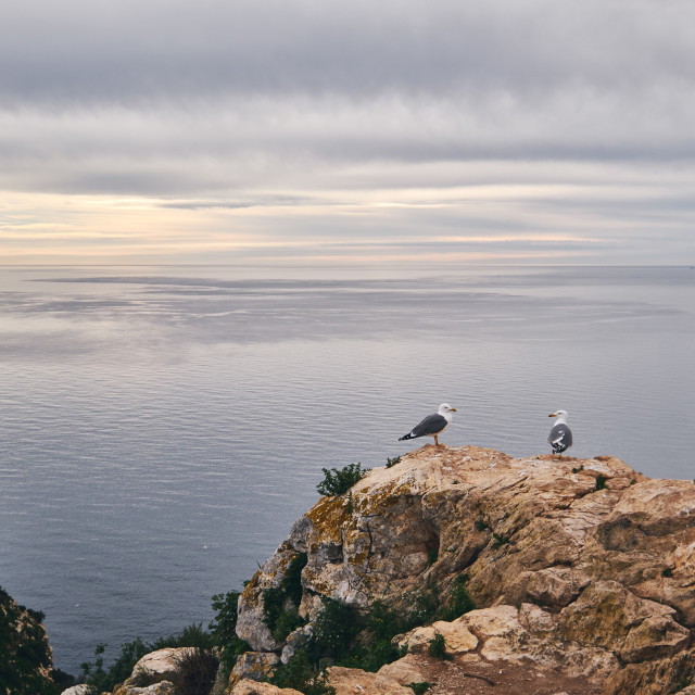 """""""Two seagull on edge of limestone mountain, no people, picturesqu"""" stock image"""