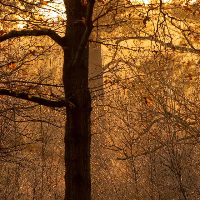 """""""Golden hour on Witley common"""" stock image"""