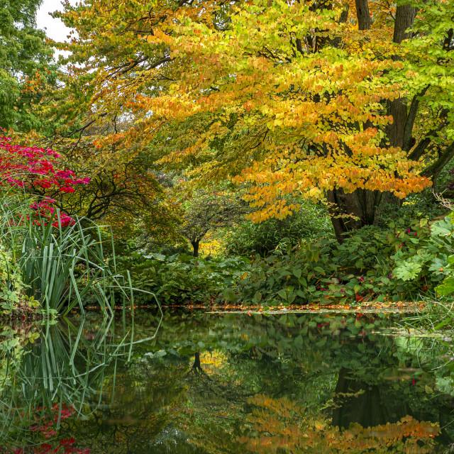 """""""Autumn reflection"""" stock image"""