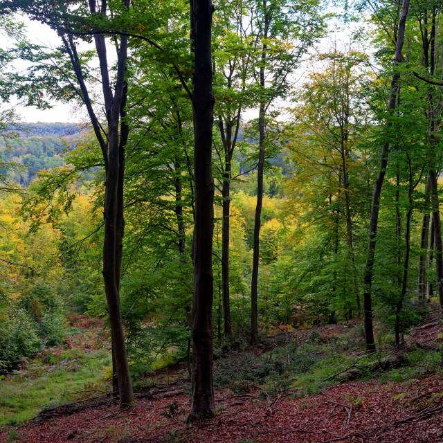 """Compiègne forest"" stock image"