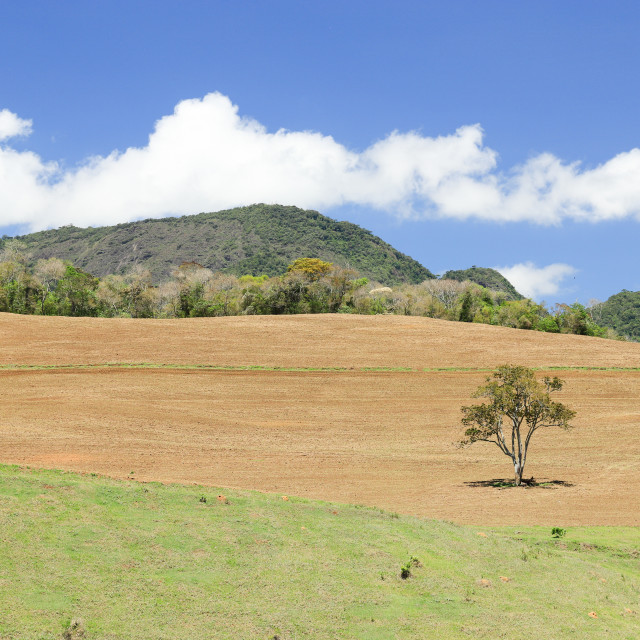 """New Brazilian arable land"" stock image"
