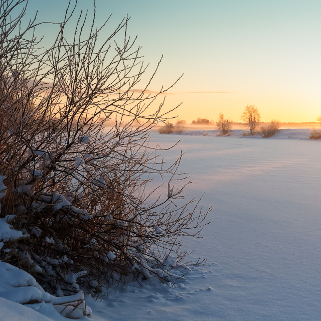 """""""Frozen Bush By The River"""" stock image"""