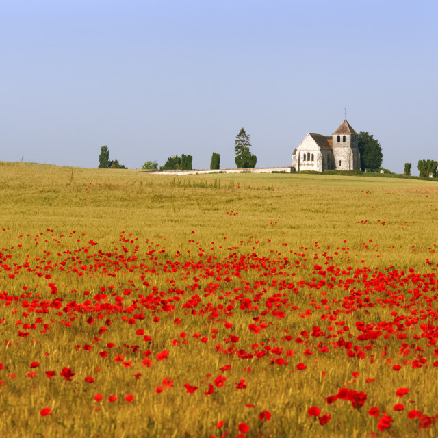 """The church and the poppies"" stock image"