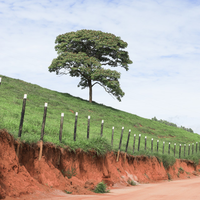 """Typical Brazilian rural landscape"" stock image"