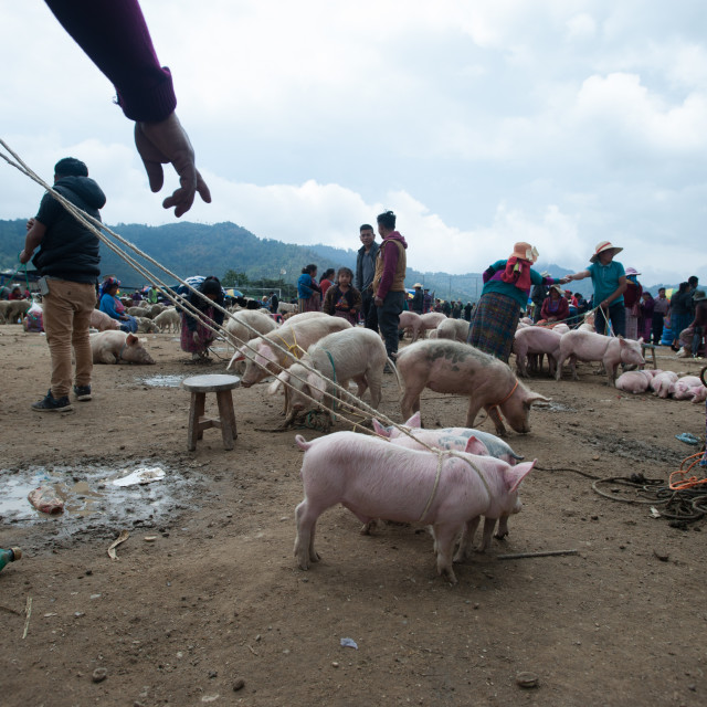 """Animal market in San Francisco El Alto in Totonicapan, Guatemala."" stock image"