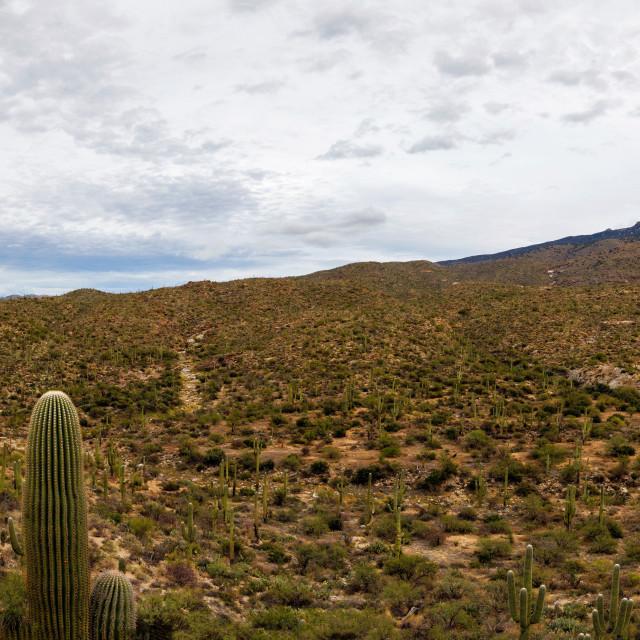 """Panorama of Saguaro National Park East, Arizona"" stock image"