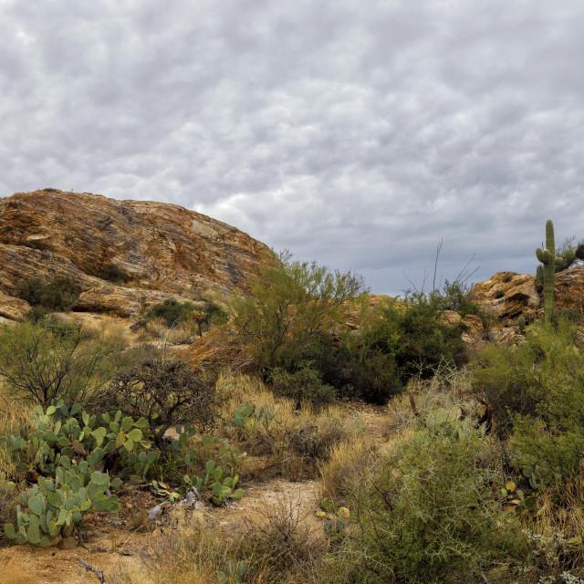 """Storm Clouds Gather Over Javelina Rocks in Arizona"" stock image"