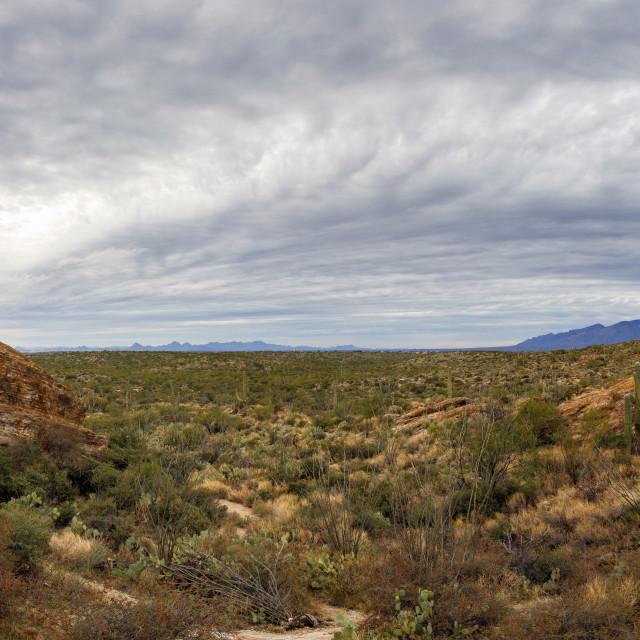 """Panoramic View of Saguaro National Park East From Javelina Rocks"" stock image"