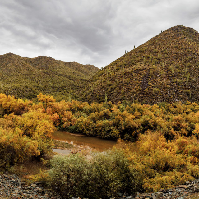 """""""Autumn Leaves Line a Small River in Rural Arizona"""" stock image"""