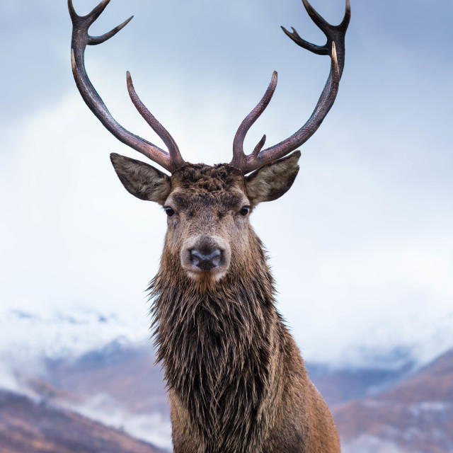 """Monarch of Glen Etive"" stock image"