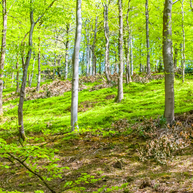 """""""English Woodland in the Summer"""" stock image"""