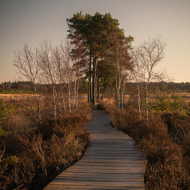 """The boardwalk at Thursley Nature Reseve"" stock image"