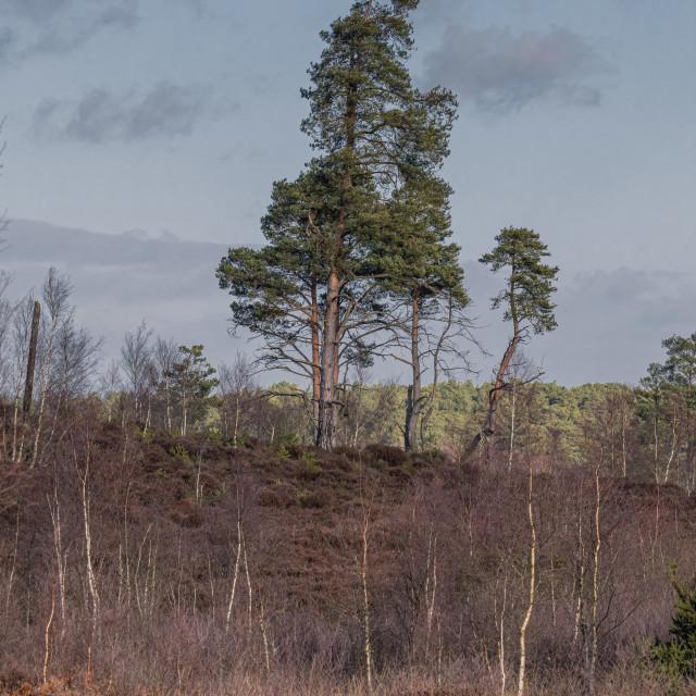 """Thursley Nature Reserve"" stock image"