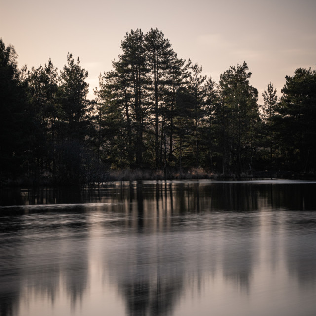 """""""Silhouette of trees by a Pond"""" stock image"""