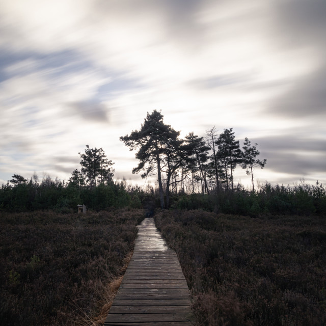 """""""The boardwalk at Thursley Nature Reseve"""" stock image"""