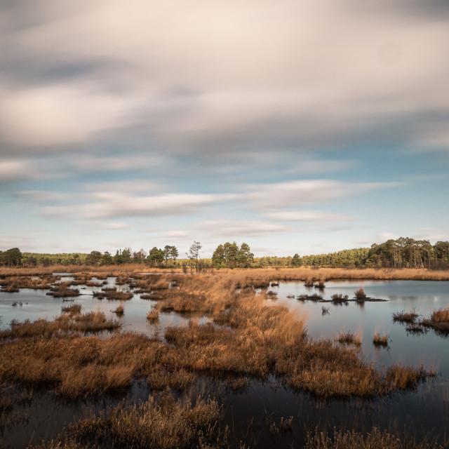 """""""Marshland at Thursley Nature Reserve"""" stock image"""