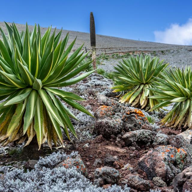 """""""Bale mountains nationalpark ethiopia"""" stock image"""
