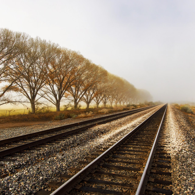 """""""Row of Trees Disappearing Into Fog By Railroad Tracks"""" stock image"""