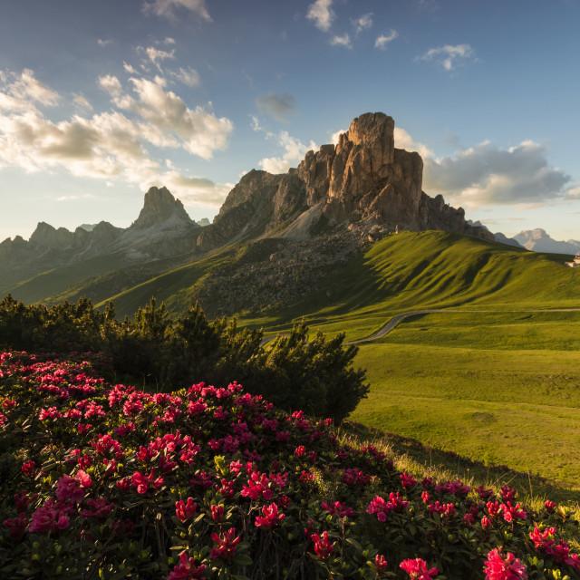 """Blooming Dolomites"" stock image"