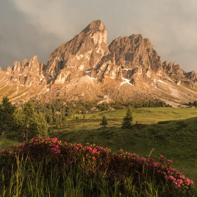 """Azaleas in the Dolomites"" stock image"