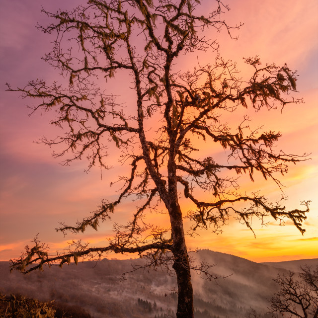 """""""Lone Tree Watching Over the Valley at Sunset"""" stock image"""