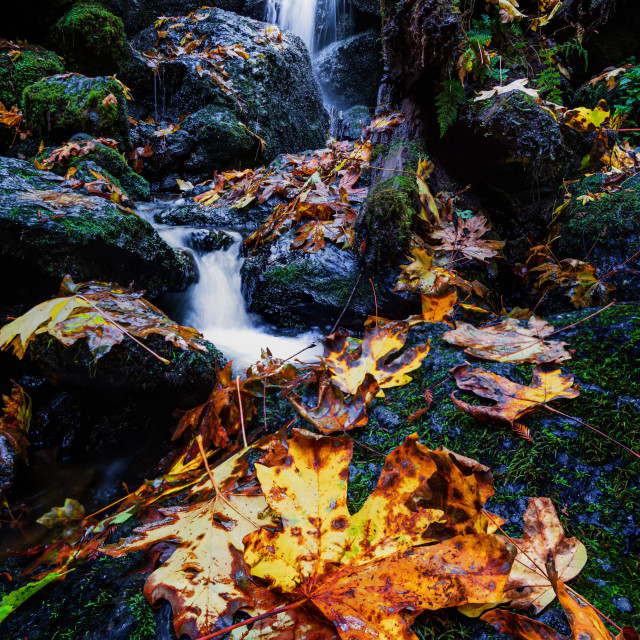 """""""Small Waterfall and Autumn Maple Leaves, Northern California"""" stock image"""