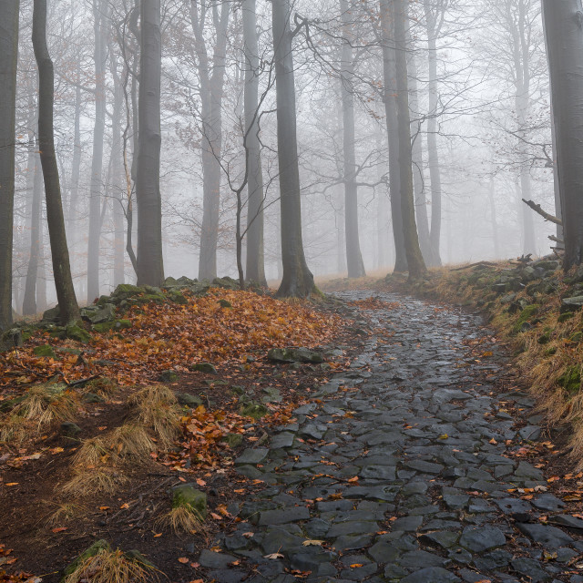 """""""Road through the forest"""" stock image"""