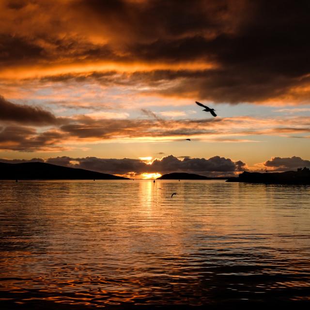 """Gulls In The Sunset, Scalloway, Shetland."" stock image"