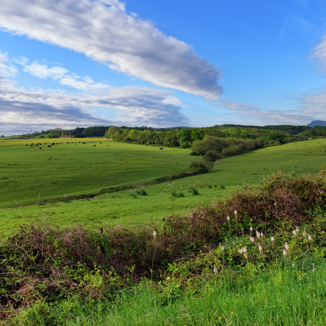 """""""Urrugne countryside"""" stock image"""