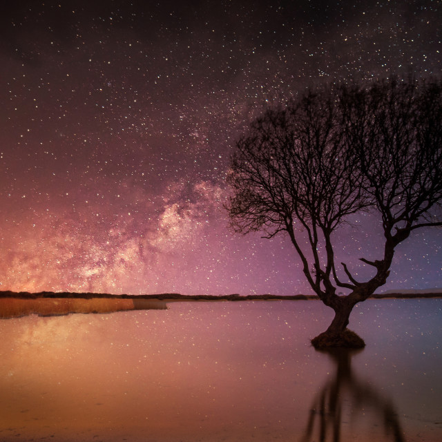 """""""Kenfig Tree by starlight"""" stock image"""
