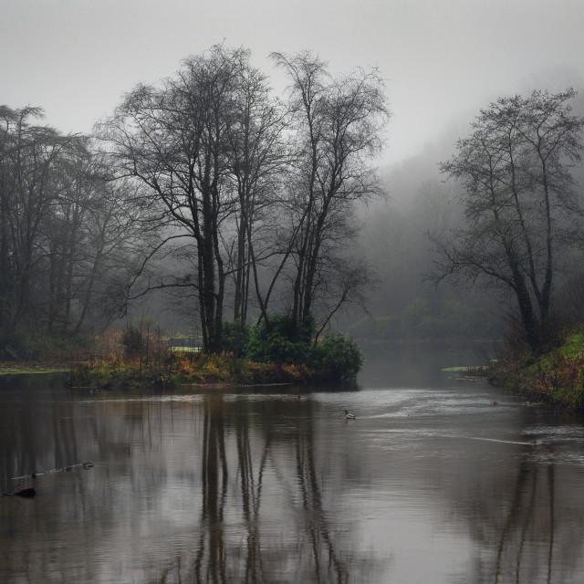 """Penllergare Valley Woods upper lake"" stock image"